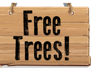 Reserve your Free Tree from the Borough by Friday, April 24!